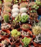 Variété de succulents et de catcus Photo libre de droits