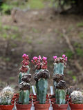 Variété de succulents et de catcus en fleur Photographie stock