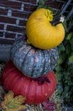 Variété douce de récolte de potiron pour faire cuire dans des couleurs d'automne photographie stock libre de droits