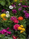 Variété et sélection des fleurs sur la rue photographie stock