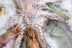 Variété grande de poissons et de fruits de mer Images libres de droits