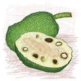 Variété injectée par fruits à pain entière et moitié découpée en tranches Image stock