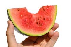 Variété lanatus de mini Citrullus rouge de pastèque le morceau lanatus avec le morceau de premorse s'est tenu dans la main gauche Photo libre de droits