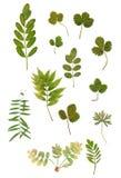 Variété multicolore de feuille verte sèche Photographie stock