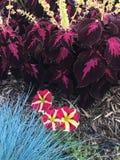 Variété rose et pourpre de fleur Image stock