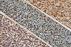 Variétés de blé Photos stock