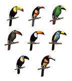 Variétés de toucan Images libres de droits