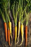Variétés organiques fraîches de carotte d'héritage de pourpre, jaune, orange photographie stock