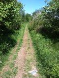 Vari alberi in Terranova, Canada fotografia stock libera da diritti