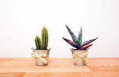 Vari cactus in vasi Fotografie Stock Libere da Diritti