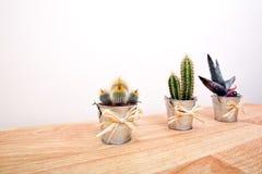 Vari cactus in vasi Immagine Stock