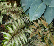 Vari colored ferns Royalty Free Stock Photo
