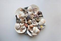 Vari conchiglie e coralli sul piatto grigio fotografie stock libere da diritti