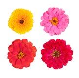 Vari fiori Fotografia Stock