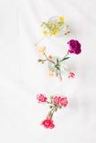 Vari fiori Immagini Stock