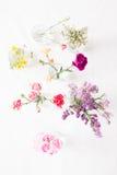 Vari fiori Fotografie Stock Libere da Diritti