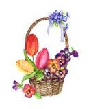 Vari fiori della molla: tulipani, viole del pensiero, viole in un canestro di vimini, la progettazione per una carta Immagine Stock Libera da Diritti