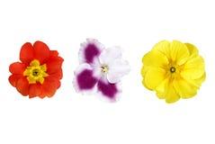 Vari fiori di colore isolati su bianco Fotografie Stock