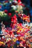 Vari fiori di fioritura variopinti Fotografia Stock Libera da Diritti
