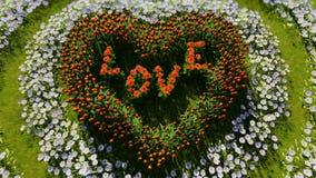 Vari fiori sotto forma di un cuore su un campo verde, come simbolo del giorno e dell'amore del ` s del biglietto di S. Valentino stock footage
