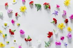 Vari fiori variopinti della molla che creano modello Fotografia Stock