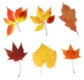 Vari fogli di autunno Immagini Stock Libere da Diritti
