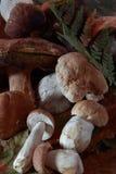 Vari funghi per cucinare Immagini Stock