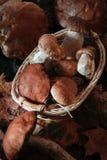 Vari funghi per cucinare Fotografia Stock