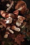 Vari funghi per cucinare Immagine Stock Libera da Diritti