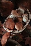 Vari funghi per cucinare Fotografia Stock Libera da Diritti
