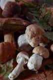 Vari funghi per cucinare Fotografie Stock Libere da Diritti