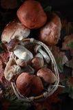 Vari funghi per cucinare Fotografie Stock