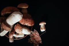 Vari funghi per cucinare Immagini Stock Libere da Diritti