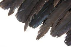 Vari livelli di colore rappresentati sulle punte delle piume di uccelli Fotografia Stock Libera da Diritti