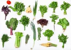 Vari mazzi di erbe culinarie fresche Immagine Stock