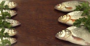 Vari pescano Fotografie Stock Libere da Diritti