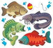 Vari pesci d'acqua dolce 2 Fotografia Stock
