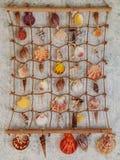 Vari Seashells Fotografie Stock Libere da Diritti