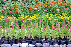 Vari tipi di fiori in vasi che sono disposti nel giardino Immagini Stock Libere da Diritti