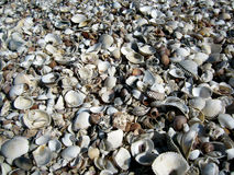 Vari tipi di seashells Fotografia Stock Libera da Diritti