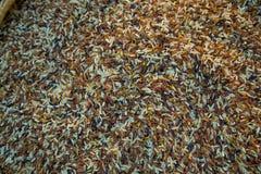 Vari tipi di varietà del riso fotografia stock