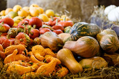 Vari tipi di zucche di autunno mature sull'azienda agricola Immagini Stock