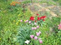 Vari tulipani e fiori selvaggi immagini stock