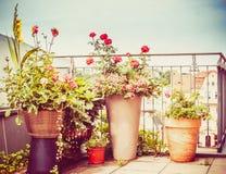 Vari vasi e piantatrice del patio dei fiori sul terrazzo o sul balcone Fotografia Stock