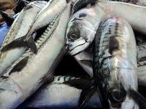 Variação dos peixes frescos Fotografia de Stock Royalty Free