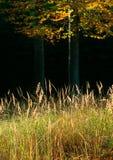 Variações da floresta do outono fotografia de stock