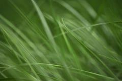 Variações das fotos com um fundo macio e borrado da grama verde, nova e fresca da mola imagem de stock