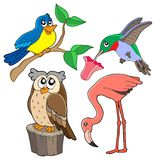 Varia accumulazione 02 degli uccelli Immagine Stock