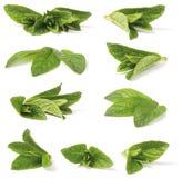 Varia hierbabuena verde Fotografía de archivo libre de regalías