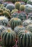 Varia i cactus Fotografie Stock